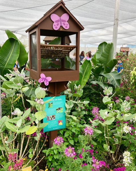 The Goodness Garden Butterfly House – Presented by GoGo squeeZ