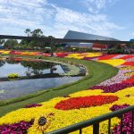 Expert Tips for Epcot International Flower and Garden Festival First-Timers